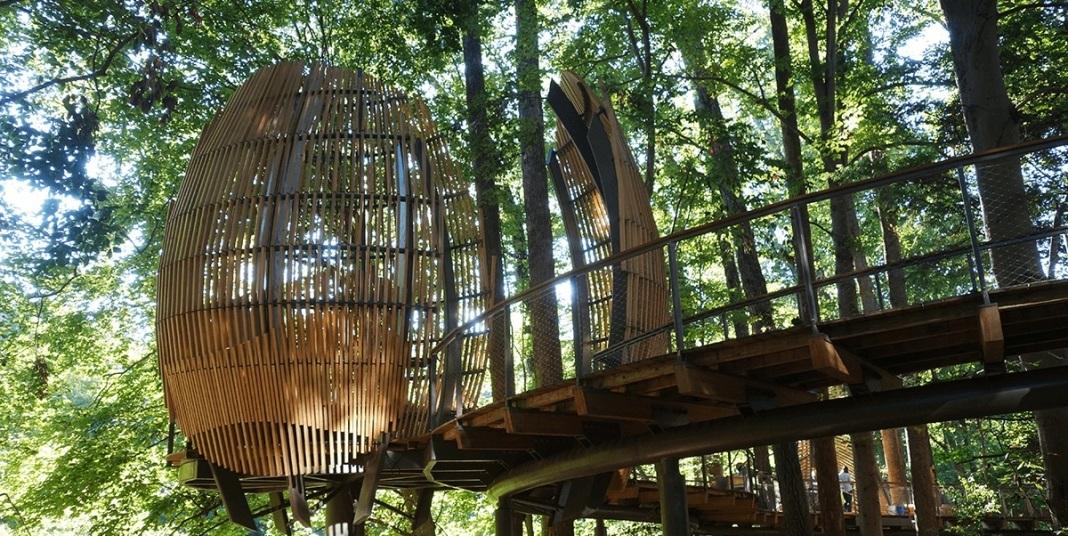 03. Wild Woods