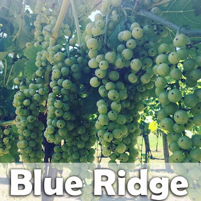 blue-ridge