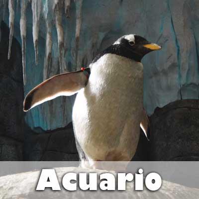 5.acuario