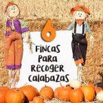 6 SITIOS PARA RECOGER CALABAZAS